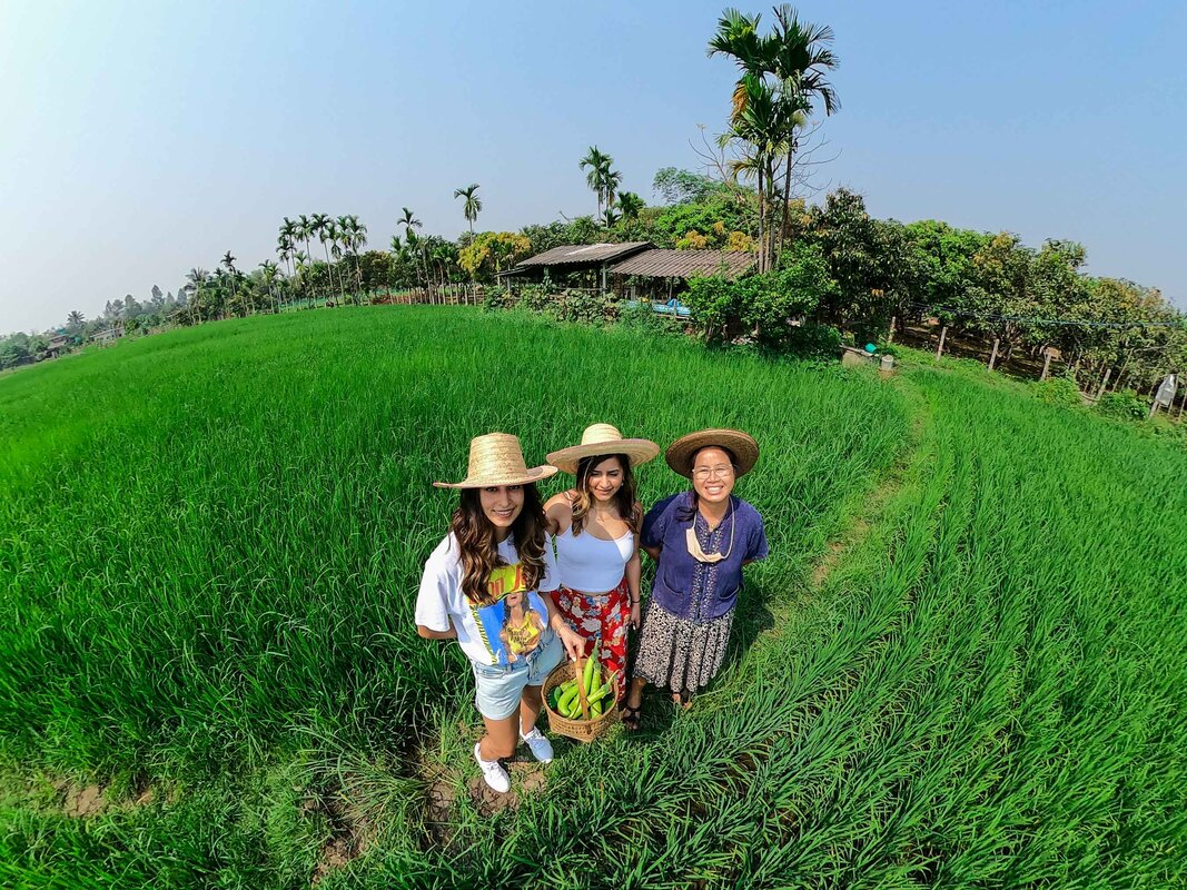 Thai Rice Farm